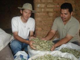 Produção de Feno1 270x202 - Criador de Piancó prepara silo para guardar ração animal usando sacos