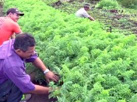 agricultores esperanca francinaldo na produção 270x202 - Governo apoia produção sem agrotóxicos em Esperança
