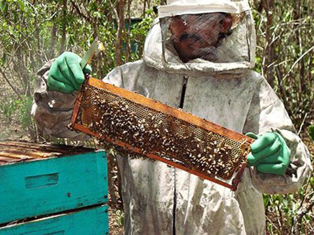 apicultura mel abelha 2 - Governo entrega 196 obras pelo Projeto Cooperar a 12 mil famílias