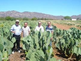 emater producao de palma irrigadausando energia solar 3 270x202 - Produção de palma irrigada usando energia solar é modelo para Nordeste