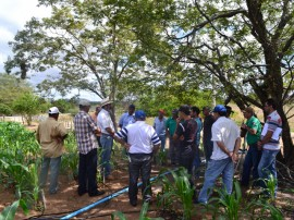emater producao de racao animal com sistema de irrigacao benefica agricultor familiar 11 270x202 - Produção de ração animal com sistema de irrigação beneficia agricultor familiar
