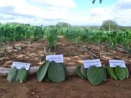 emater producao de racao animal com sistema de irrigacao benefica agricultor familiar 2 270x202 - Produção de ração animal com sistema de irrigação beneficia agricultor familiar