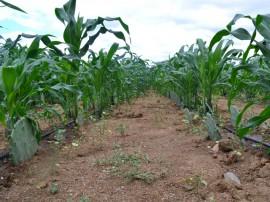 emater producao de racao animal com sistema de irrigacao benefica agricultor familiar 3 270x202 - Produção de ração animal com sistema de irrigação beneficia agricultor familiar