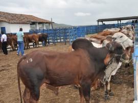 emepa leilao bovino foto joao francisco 12 270x202 - Emepa vai fazer leilão de bovinos na estação experimental de Alagoinha