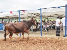 emepa leilao bovino foto joao francisco 1451 270x202 - Emepa vai fazer leilão de bovinos na estação experimental de Alagoinha