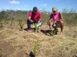 086 plantio de palma cajazeirinhas1 270x202 - Agricultores participam de treinamento sobre palma forrageira no Sertão