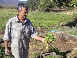 emater agricultor do semiarido aumenta producao de hortalicas Cajazeinha 1 270x202 - Agricultor aumenta renda produzindo hortaliças no semiárido