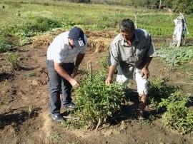 emater agricultor do semiarido aumenta producao de hortalicas Cajazeinha 2 270x202 - Agricultor aumenta renda produzindo hortaliças no semiárido
