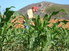 emater familia vive em menos de um hectare 4 270x202 - Governo incentiva agricultura familiar no Sertão paraibano
