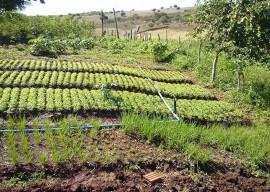 emater coremas2 270x192 - Produção familiar garante renda para agricultores do Sertão
