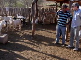 quixaba  preacas  foto francisco frança 1 270x202 - Sítios recebem governador pela 1ª vez e mostram sucesso na caprinocultura