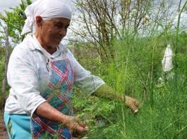 04.09.13 agricultora 83anos cultiva hortalias fabrica bolo 1 270x202 - Com ajuda da Emater, agricultora de 83 anos cultiva hortaliças e fabrica bolos