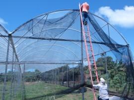 06.09.13 cooperar viabiliza construcao estufa 2 270x202 - Cooperar viabiliza construção de estufa para agricultores de Pitimbu