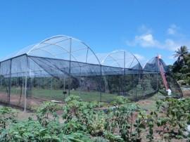06.09.13 cooperar viabiliza construcao estufa 3 270x202 - Cooperar viabiliza construção de estufa para agricultores de Pitimbu