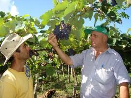 30.09.13 emater completa58anos mais perto agricultores 2 270x202 - Emater completa 58 anos com ações de inclusão produtiva e social para agricultores