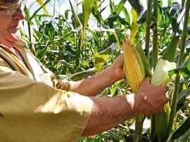 Foto Antonio David 0 7 270x202 - Emater completa 58 anos com ações de inclusão produtiva e social para agricultores