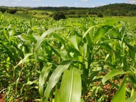 agricultura organica alagoa grande foto antonio david 6 270x202 - Governo incentiva agricultura familiar no Sertão paraibano