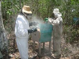 apicultura mel abelha 270x202 - Governo estrutura cadeia produtiva para beneficiar mel paraibano