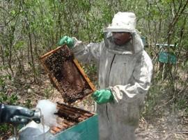 apicultura mel abelha 3 270x202 - Governo estrutura cadeia produtiva para beneficiar mel paraibano
