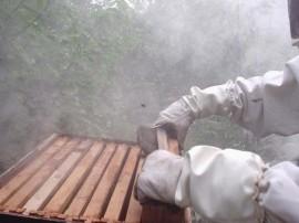 emater apoio a apicultura Mel em sao jose dos cordeiros Fotos Robison 2 270x202 - Emater distribui mudas de frutíferas para atrair abelhas e repovoar colmeias