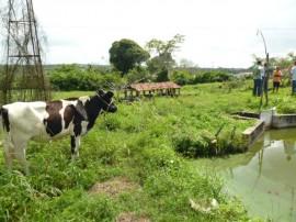 emater criacao de camarao no vale do paraiba 2 270x202 - Criação de camarão garante renda para famílias do Vale do Paraíba