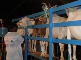 emater pb destaque na assembleia do maranhao sobre caprinocultura 1 270x202 - Trabalho da Emater com caprinocultura é destaque na AL do Maranhão