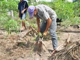 festa da mandioca em mari emater 1 270x202 - Cultivo e consumo de mandioca são discutidos durante evento em Mari