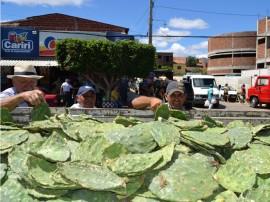 jornada produtiva em SUME 3 270x202 - Governo distribui sementes de sorgo e raquetes de palma em Sumé