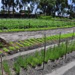 seap presidio colonia agricula foto antonio david (49)