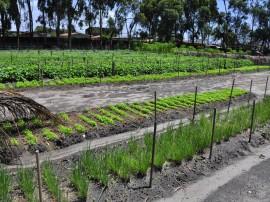 seap presidio colonia agricula foto antonio david 49 270x202 - Alimentos cultivados por reeducandos abastecem unidades prisionais