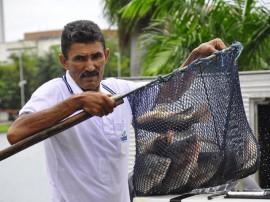 sedap semana do peixe foto jose lins 1 270x202 - Semana do Peixe disponibiliza pescado com 60% de desconto