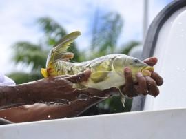 sedap semana do peixe foto jose lins 6 270x202 - Semana do Peixe disponibiliza pescado com 60% de desconto