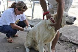 vacina 11 270x180 - Paraíba realiza dia 'D' de vacinação contra a raiva animal