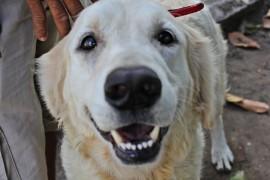 vacina 2 270x180 - Paraíba realiza dia 'D' de vacinação contra a raiva animal
