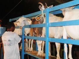 emater pb destaque na assembleia do maranhao sobre caprinocultura 1 270x202 - Governo investe mais de R$ 350 milhões no desenvolvimento da agropecuária