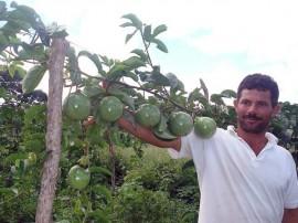 emater semana de alimentacao Plantio de Maracuja Esperança1 270x202 - Governo comemora Semana Nacional da Alimentação