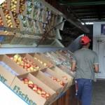 emepa campanha aumento de consumo de frutas legumes e verduras 2 150x150 - Campanha incentiva consumo de frutas, legumes e verduras na Empasa
