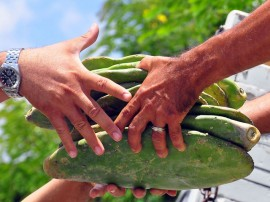 entrega de palma na emater itabaiana jose lins secom pb 0185 270x202 - Governo investe mais de R$ 350 milhões no desenvolvimento da agropecuária