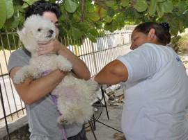 vacinacao de animais foto jose lins2 270x202 - Governo do Estado vai imunizar mais de 100 mil cães e gatos em 42 municípios