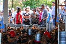 GUARABIRA CABOCLO ALIMENTOS 20 portal 270x179 - Ricardo inaugura aviário e beneficia 21 famílias da zona rural