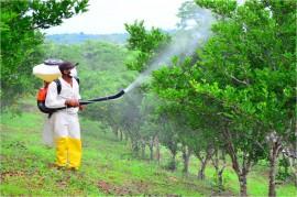 Mosca negra 1 1 270x179 - Governo cria alternativas para combater mosca-negra-dos-citros