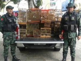 bpamb pm ambiental apreencao de aves na regiao metropolitana 11 270x202 - Polícia apreende 253 aves em operação na Região Metropolitana