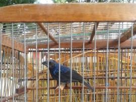 bpamb pm ambiental apreencao de aves na regiao metropolitana 2 270x202 - Polícia apreende 253 aves em operação na Região Metropolitana