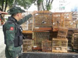 bpamb pm ambiental apreencao de aves na regiao metropolitana 3 270x202 - Polícia apreende 253 aves em operação na Região Metropolitana