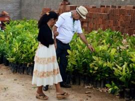 agricutores de matureia recebem mudas de arvores frutiferas pela emater 32 270x202 - Governo entrega mudas de frutíferas a agricultores de Matureia
