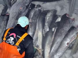 atum pescadores foto francisco frança 21 270x202 - Governo incentiva pesca em Cabedelo com recursos do Empreender-PB