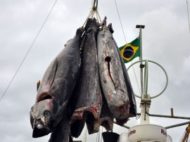 atum pescadores foto francisco frança 58 270x202 - Governo incentiva pesca em Cabedelo com recursos do Empreender-PB