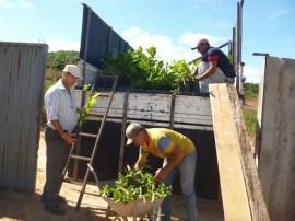 emater e emepa Matureia mudas frutiferas agricultores 2 270x202 - Emater e Emepa levam mudas frutíferas para agricultores familiares em Matureia