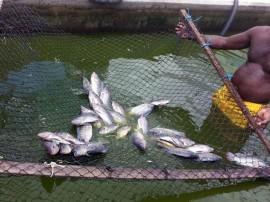 foto do peixe 270x202 - Governo realiza curso de piscicultura para reclusos da Penitenciária de Segurança Máxima de Mangabeira