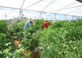 11.03.14 agricultura familiar 12 270x192 - Paraíba comercializará produtos da agricultura familiar na Copa do Mundo